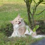 Phili im Garten