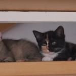 Meredith & Sookie