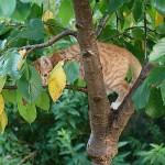 Sam im Dschungel